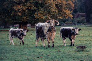 Parkland Longhorns